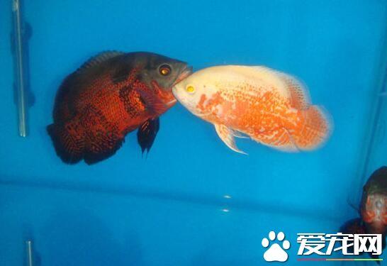热带鱼缺氧怎么办 热带鱼缺氧的原因